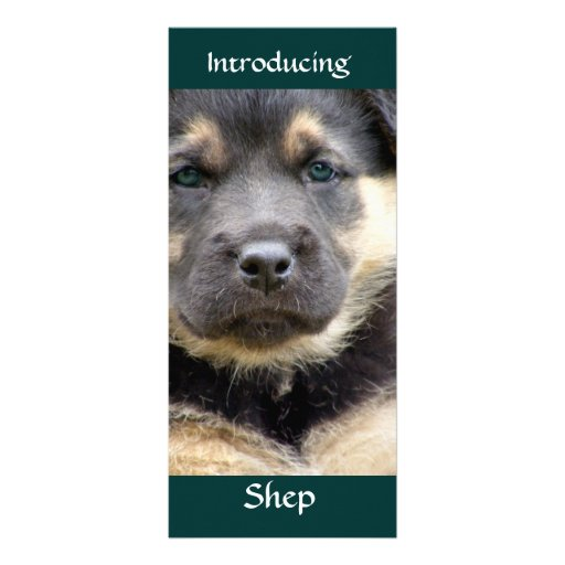 Shep Dog Personalized Rack Card