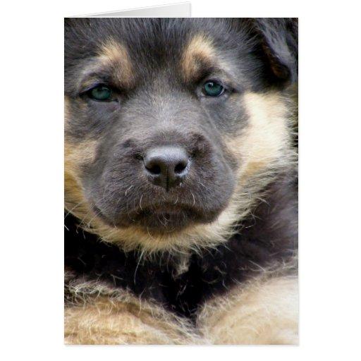 Shep Puppy Card