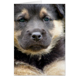 Shep Puppy Greeting Card