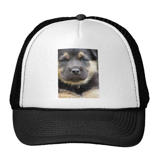 Shep Puppy Trucker Hats