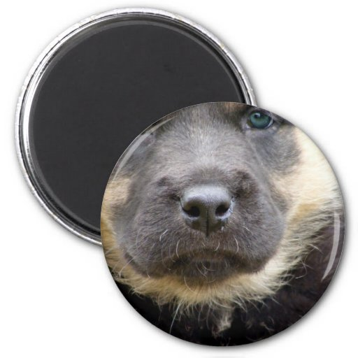Shep Puppy Fridge Magnets