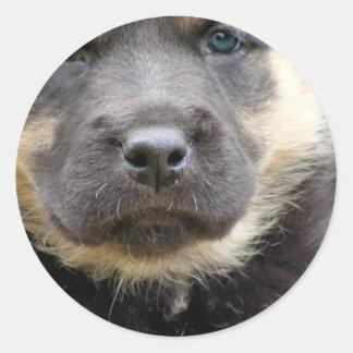 Shep Puppy Round Sticker