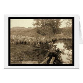 Shepherd and Flock South Dakota 1891 Card