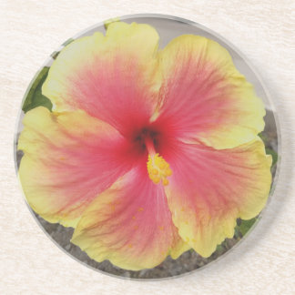 Sherbet Hibiscus Coaster