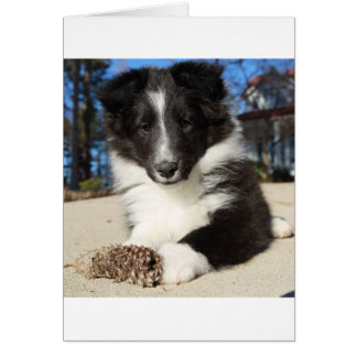 shet shp black and white puppy card