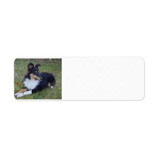 shet shp black white tan laying full return address label
