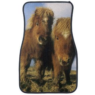 Shetland Pony, mainland Shetland Islands, Car Mat