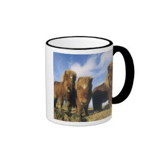 Shetland Pony, mainland Shetland Islands, Ringer Mug