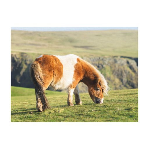 Shetland Pony On Pasture Near High Cliffs Stretched Canvas Print