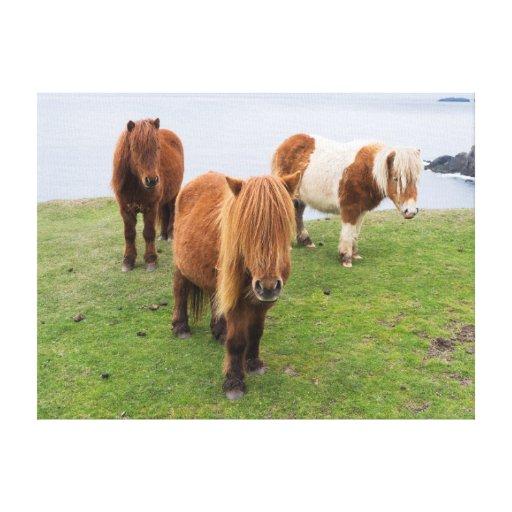 Shetland Pony on Pasture Near High Cliffs Canvas Print