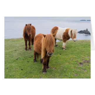 Shetland Pony on Pasture Near High Cliffs Card