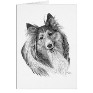 Shetland Sheepdog Drawing by Glenda S. Harlan Card
