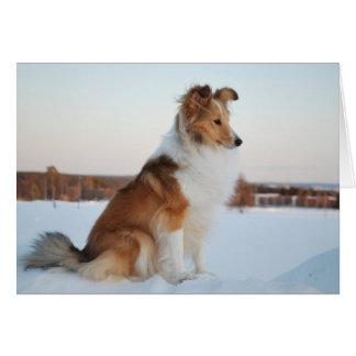 Shetland sheepdog paper product card