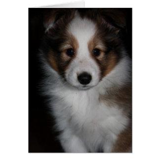 Shetland Sheepdog Puppy Card