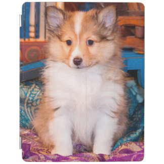 Shetland Sheepdog puppy sitting by small wagon iPad Cover