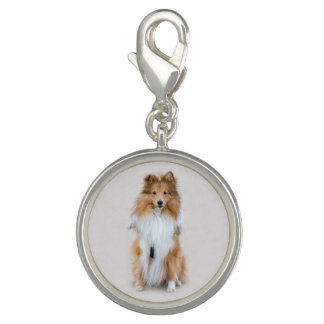 Shetland Sheepdog, sheltie cute dog photo portrait