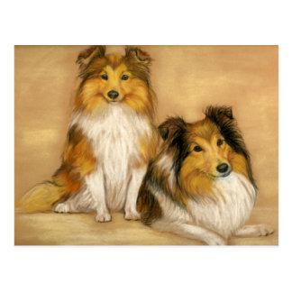 Shetland Sheepdog Sheltie Dog Art Postcard