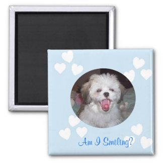 ShiaZu Puppie Magnet