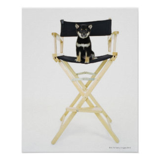 Shiba Inu dog on director's chair Poster