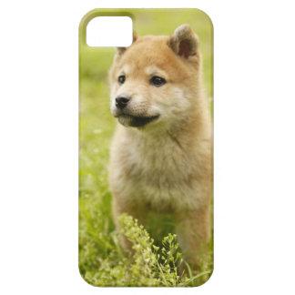 Shiba-Ken Welpe iPhone 5 Case