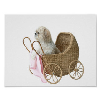 Shih Tzu baby carriage Poster