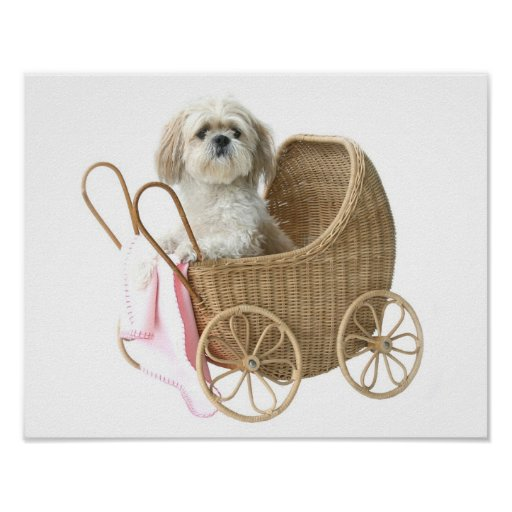 Shih Tzu baby carriage Posters