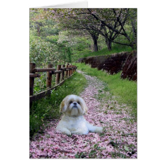 Shih Tzu Card Purple Flowers