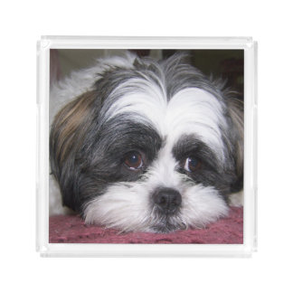 Shih Tzu Dog Acrylic Tray