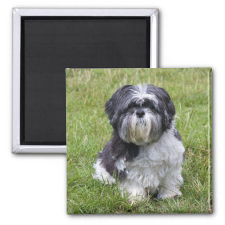 Shih Tzu dog beautiful cute photo magnet