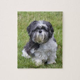 Shih Tzu dog cute beautiful photo jigsaw puzzle