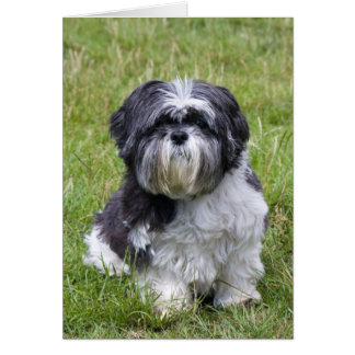 Shih Tzu dog cute blank note card, greeting card