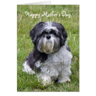 Shih Tzu dog cute mother's day greeting card
