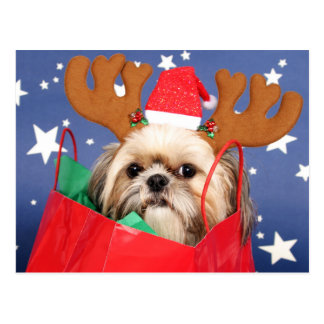Shih Tzu dog in a red shopping bag Postcard