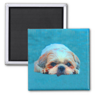 Shih Tzu Dog Water color art Portrait Magnet
