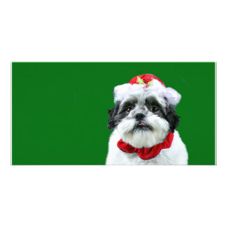 Shih Tzu Mrs Claus Customized Photo Card