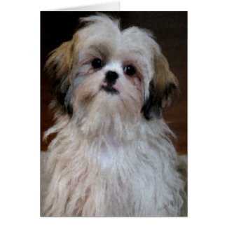 Shih Tzu Note Card