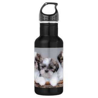 Shih Tzu puppies 532 Ml Water Bottle