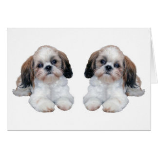 Shih Tzu Puppies Card