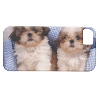 Shih Tzu puppies under a checked blanket iPhone 5 Cover