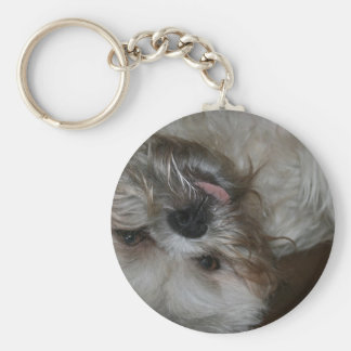 shih tzu puppy dog adorable cute photo key ring