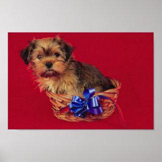 Shih Tzu Puppy In Basket Poster