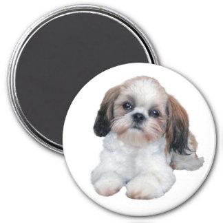 Shih Tzu Puppy Magnet