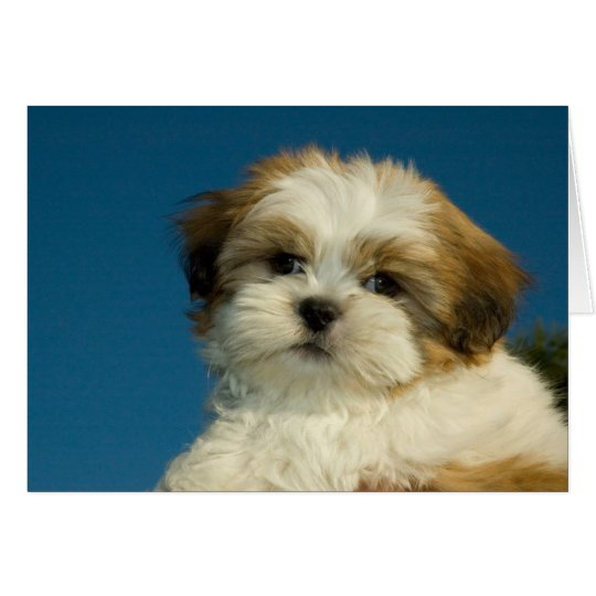 "Shih Tzu Puppy ""Thinking of you"" Card"