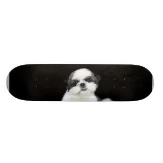 Shih Tzu skateboard
