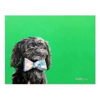 Shih Tzu Yorkie Dog Postcard - Chip