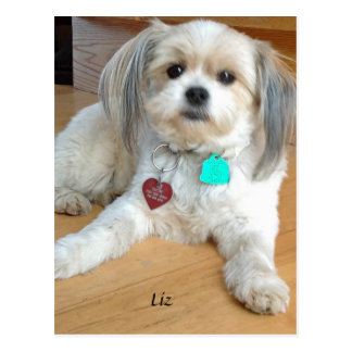 Shih TzuX  named Liz Postcard