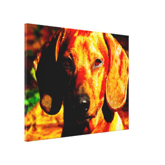 Shimmering Glowing Dachshund Face Closeup Gallery Wrapped Canvas