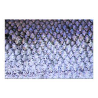 Shimmering Silver Salmon Photo Print