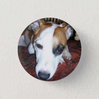 Shiner is bored 3 cm round badge