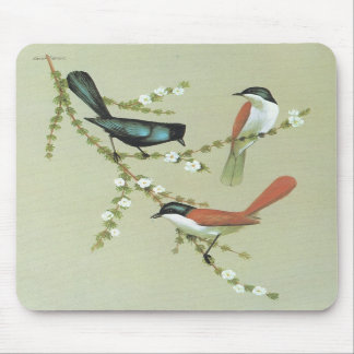 Shining Flycatcher - Myiagra aleco Mouse Pads
